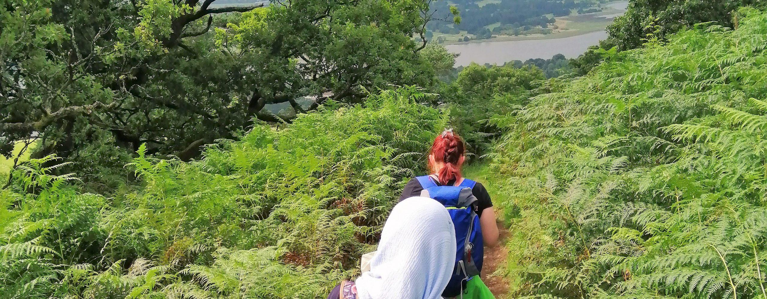 Following walkers through ferns